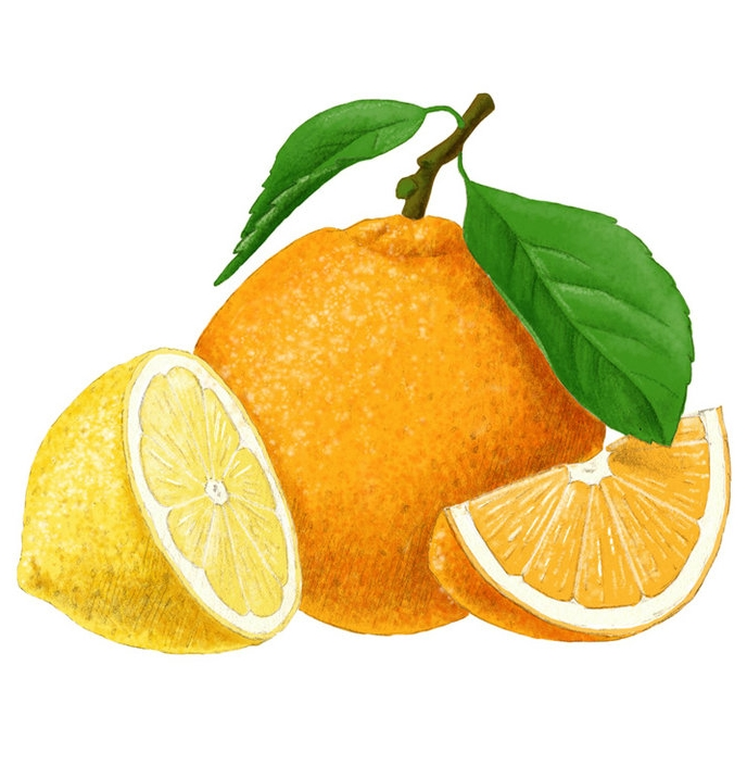 produkteillustration-verpackungsillustration-sirup-orange-zitrone.jpg