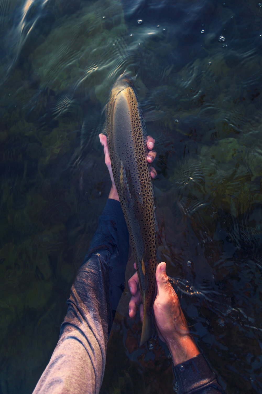 Lucasflyfishing-IMG_1600.jpg