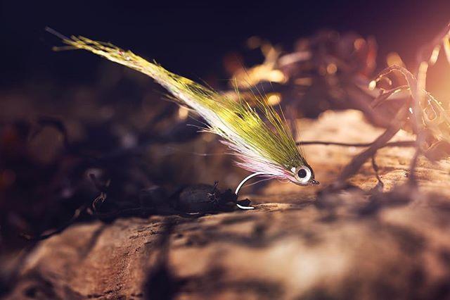 CF-Buck! #lucasflyfishing #seatrout #searun #searunbrowntrout #trout #troutfishing #havsöring #öring #meriforell #havørred #sjøørred #meerforelle #flyfishing #fishing #saltwaterflyfishing #coastalfyfishing #flytying #flytyingjunkie #baitfish #baitfishfly