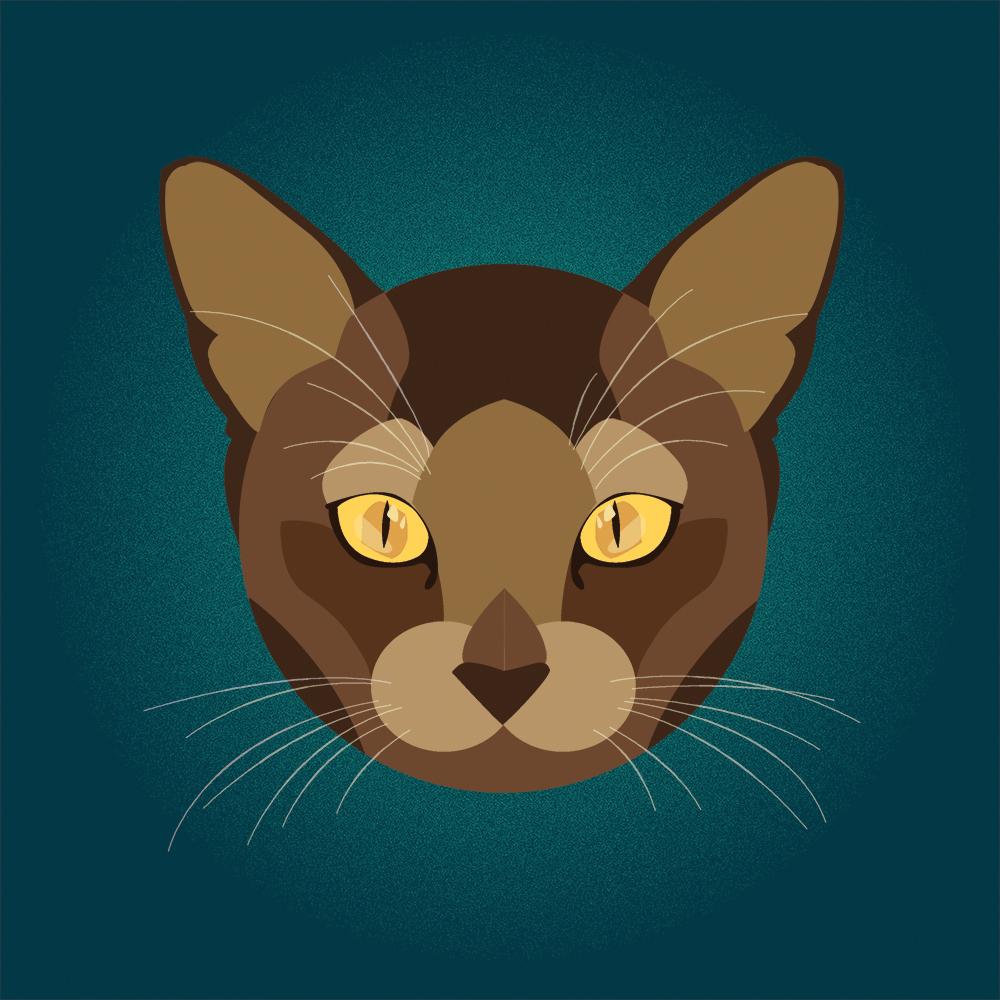3. Cat Illustration.jpg