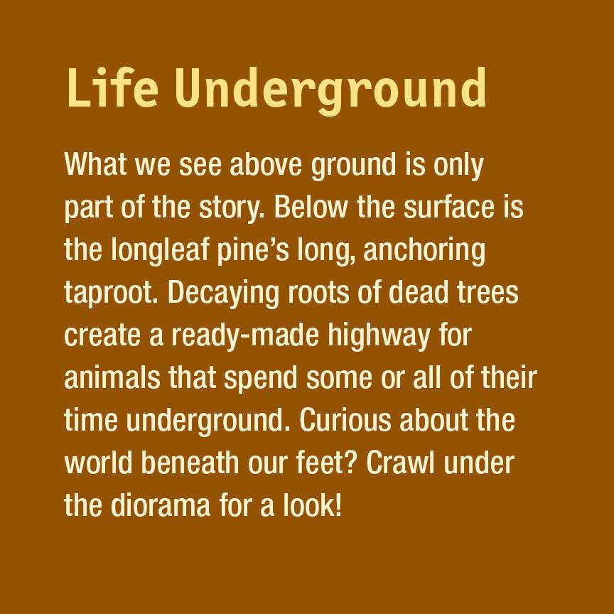 03.40.20.915.GR_Life-Underground.jpg