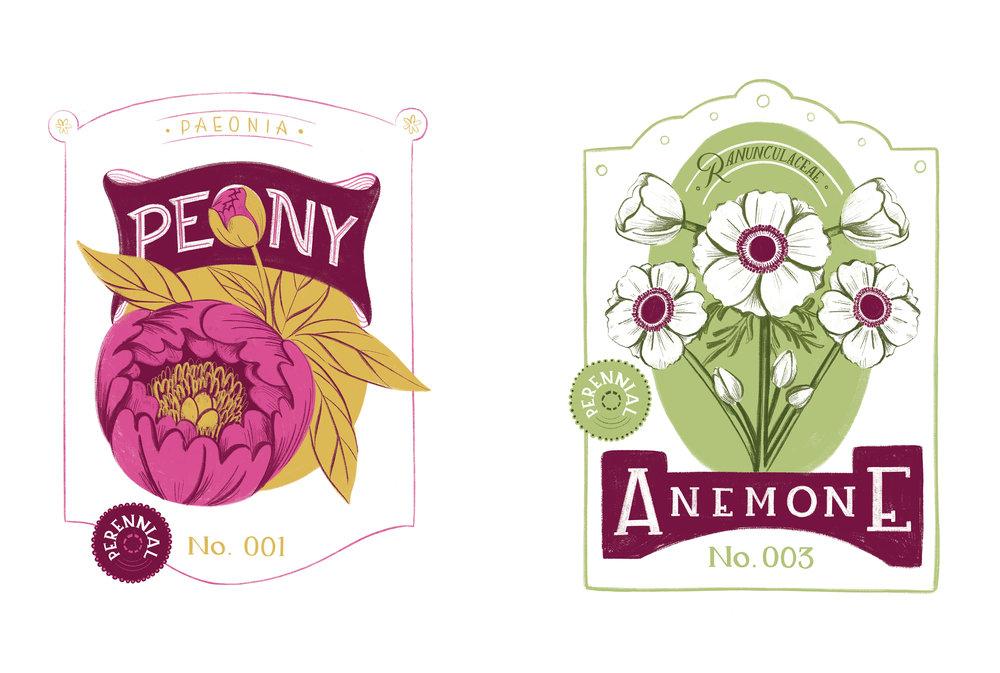 Anemonie_Peony_RGB.jpg