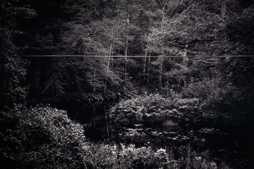 nature2_mira.jpg