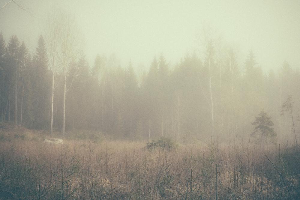 nature1_mira.jpg