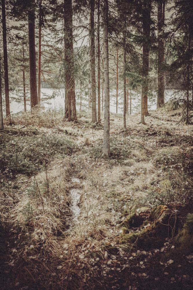 nature7_mira.jpg