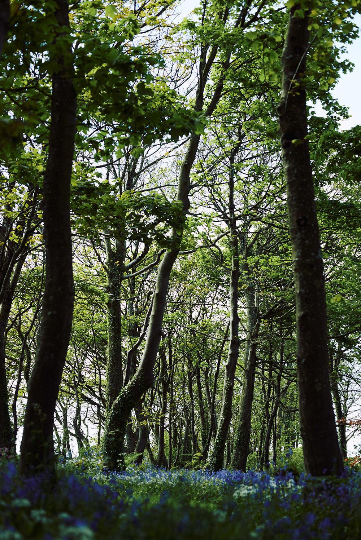140512-MT-Landscape-117-web-1600-px.jpg