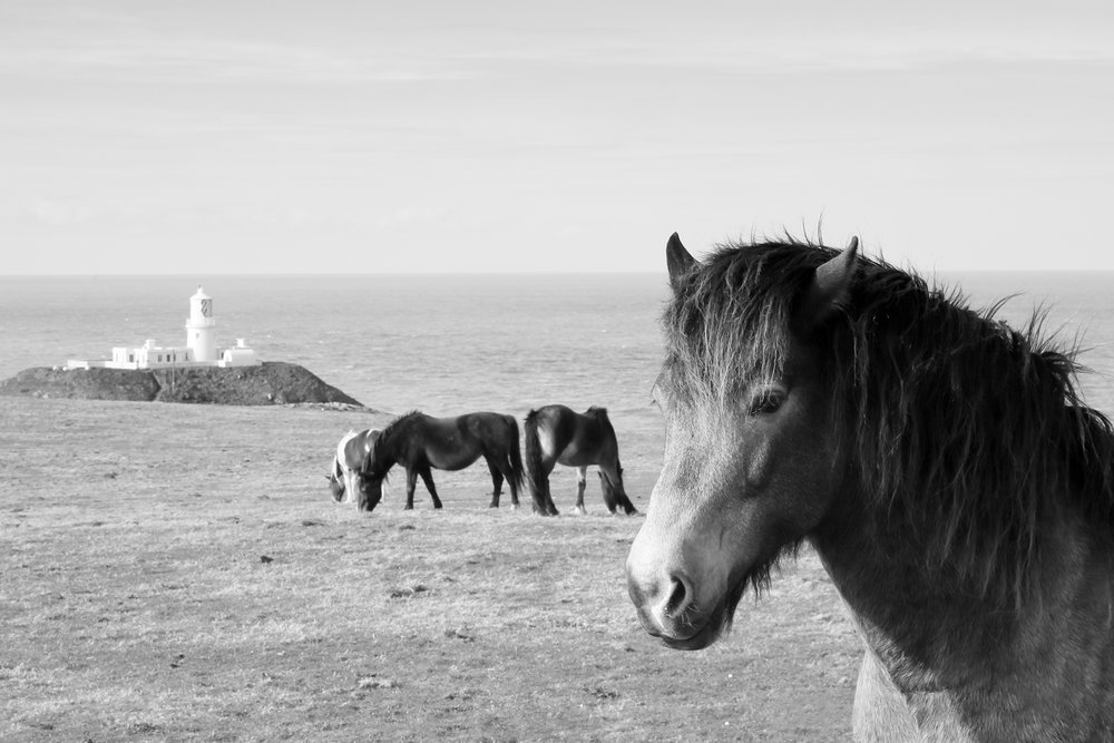 Ponies, Strumble Head