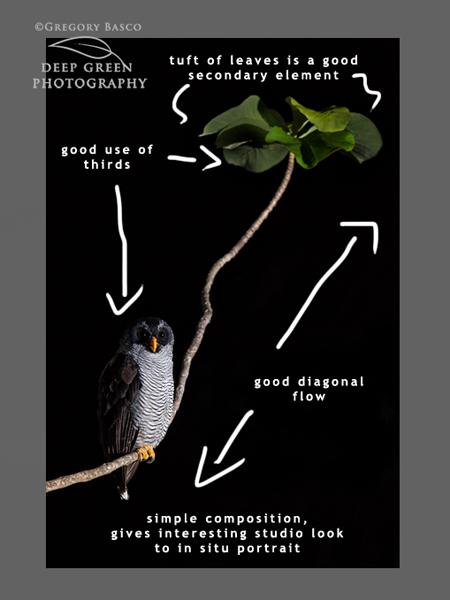 owl-markup