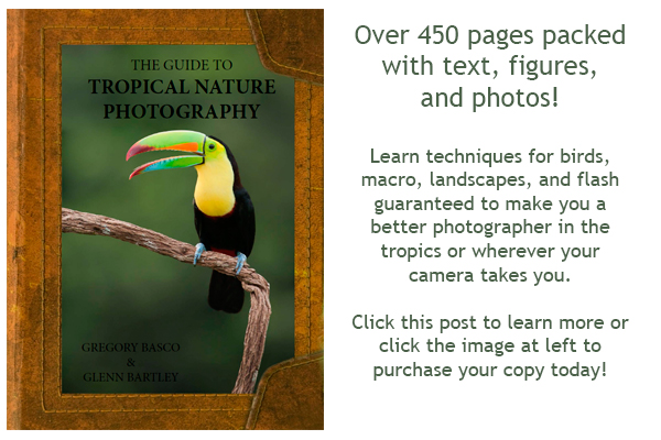 The Guide to Tropical Nature Photography