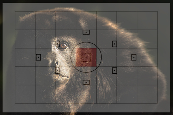 Howler Monkey behind the lens