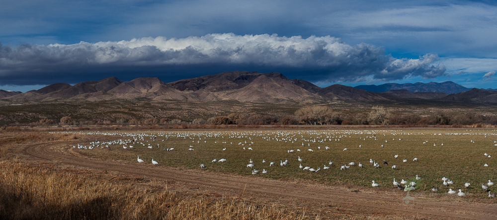 bosque del apache panoramic