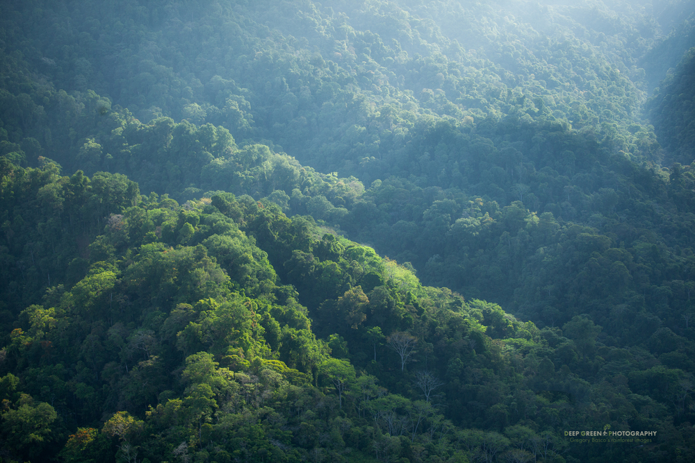 The rainforests of Costa Rica's Osa Peninsula, one of the most biodiverse places on the planet