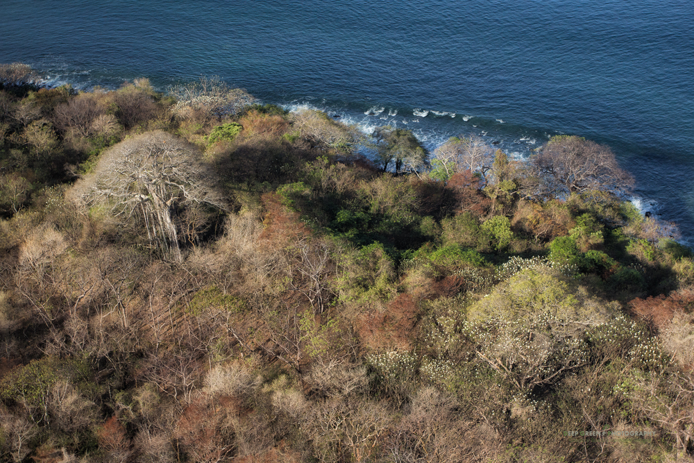 Tropical dry forest meets the Pacific Ocean in Costa Rica's Guanacaste province.