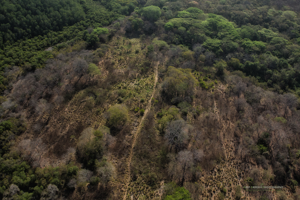 Aerial view of the tropical dry forests of Costa Rica's Guanacaste province. Tropical dry forests are one of the most threatened habitats in Central America.