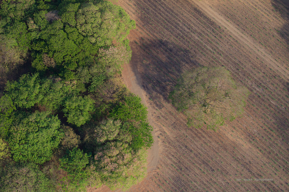 Deforestation for cattle ranching and agriculture is an ongoing threat to the tropical dry forests of Costa Rica's Guanacaste province.