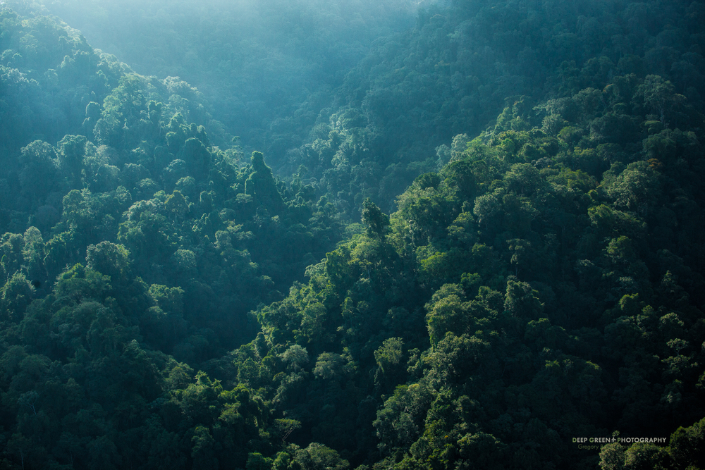 Aerial view of rainforest in Costa Rica's Corcovado National Park