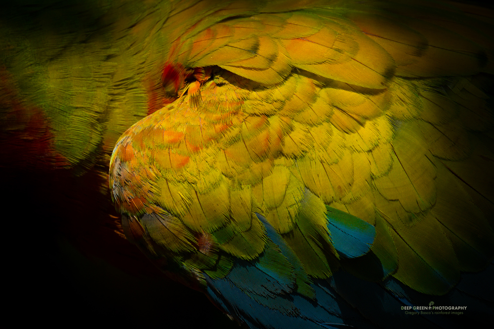 great green macaw abstract