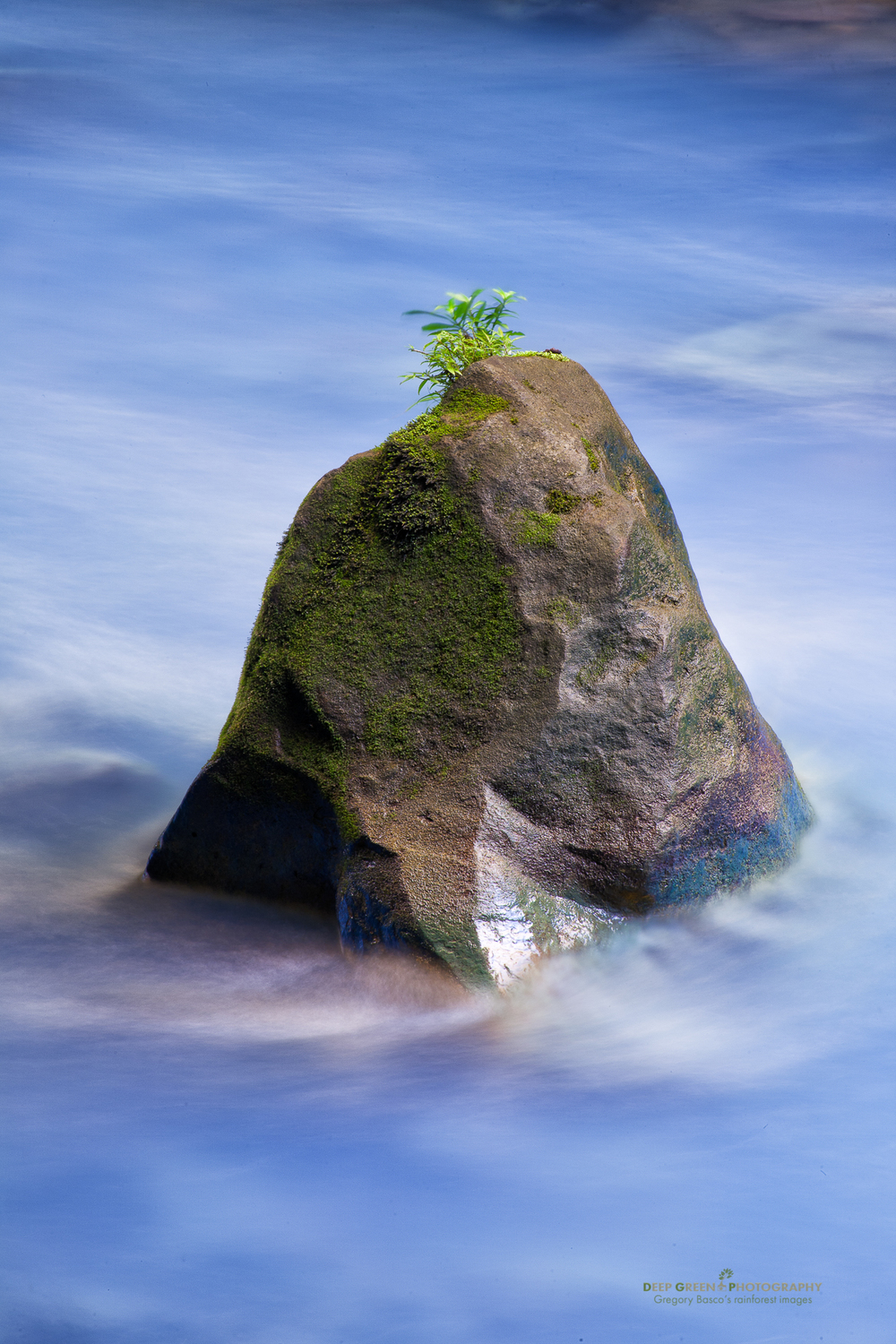 The Rio Celeste in Costa Rica's Tenorio Volcano National Park is one of my favorite destinations in the country for landscape photography. Nonetheless, one of my favorite images from the area is this simple composition of a rock, a shrub sapling, and the otherworldly blue water of the river, which results from suspended silica colloids, probably of volcanic origin. A slow shutter speed and polarizing filter helped to accentuate the flowing blue water, a nice contrast with the stationary rock.