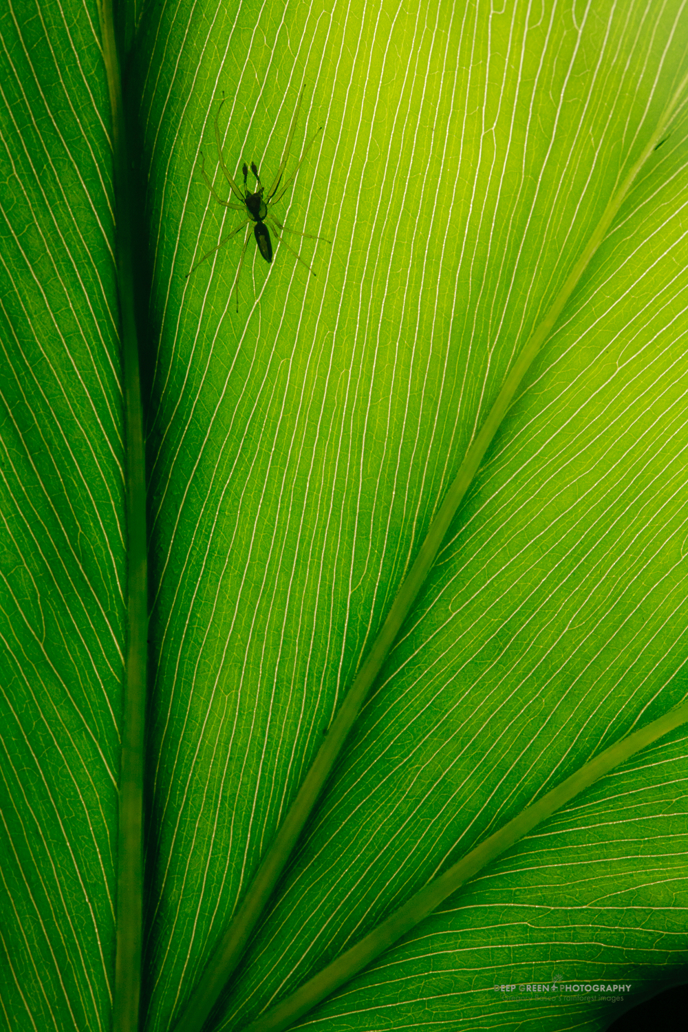 spider on a leaf in Tortuguero