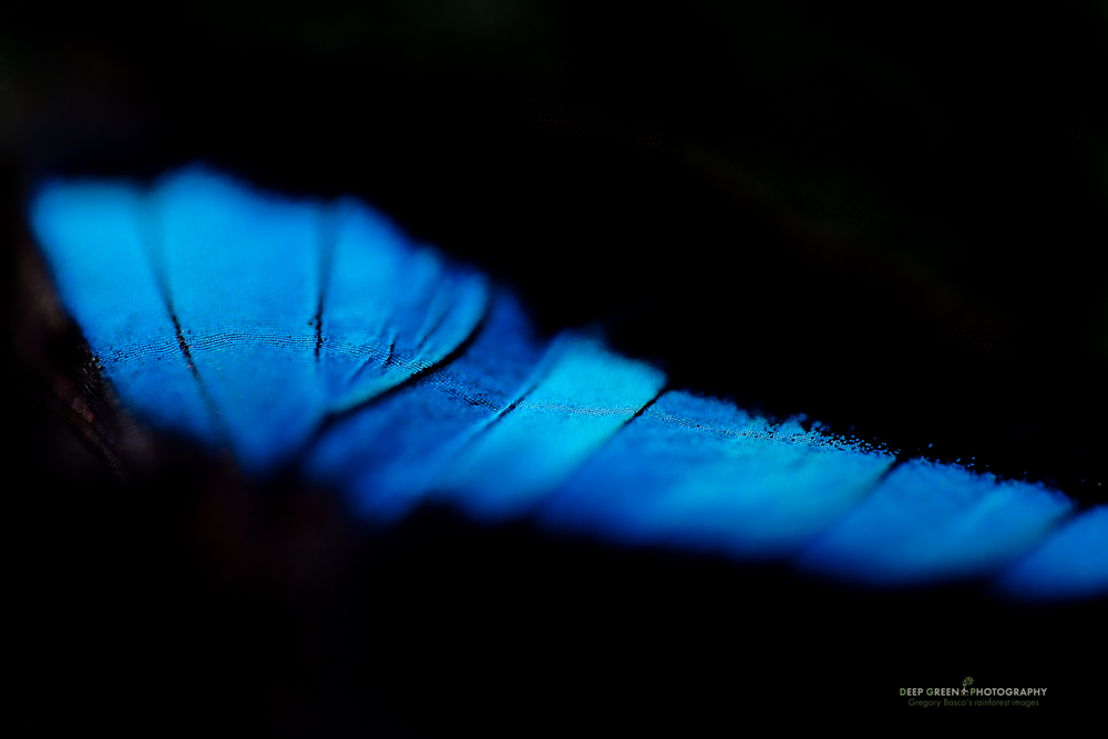 abstract of a live butterfly wing