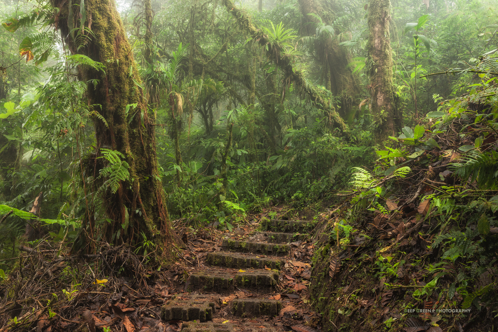 a trail in the famed Monteverde Cloud Forest Preserve