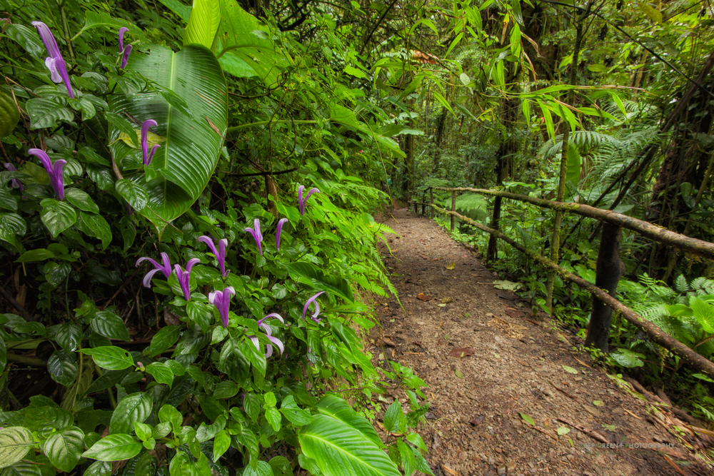 a trail at the Sky Walk in Monteverde