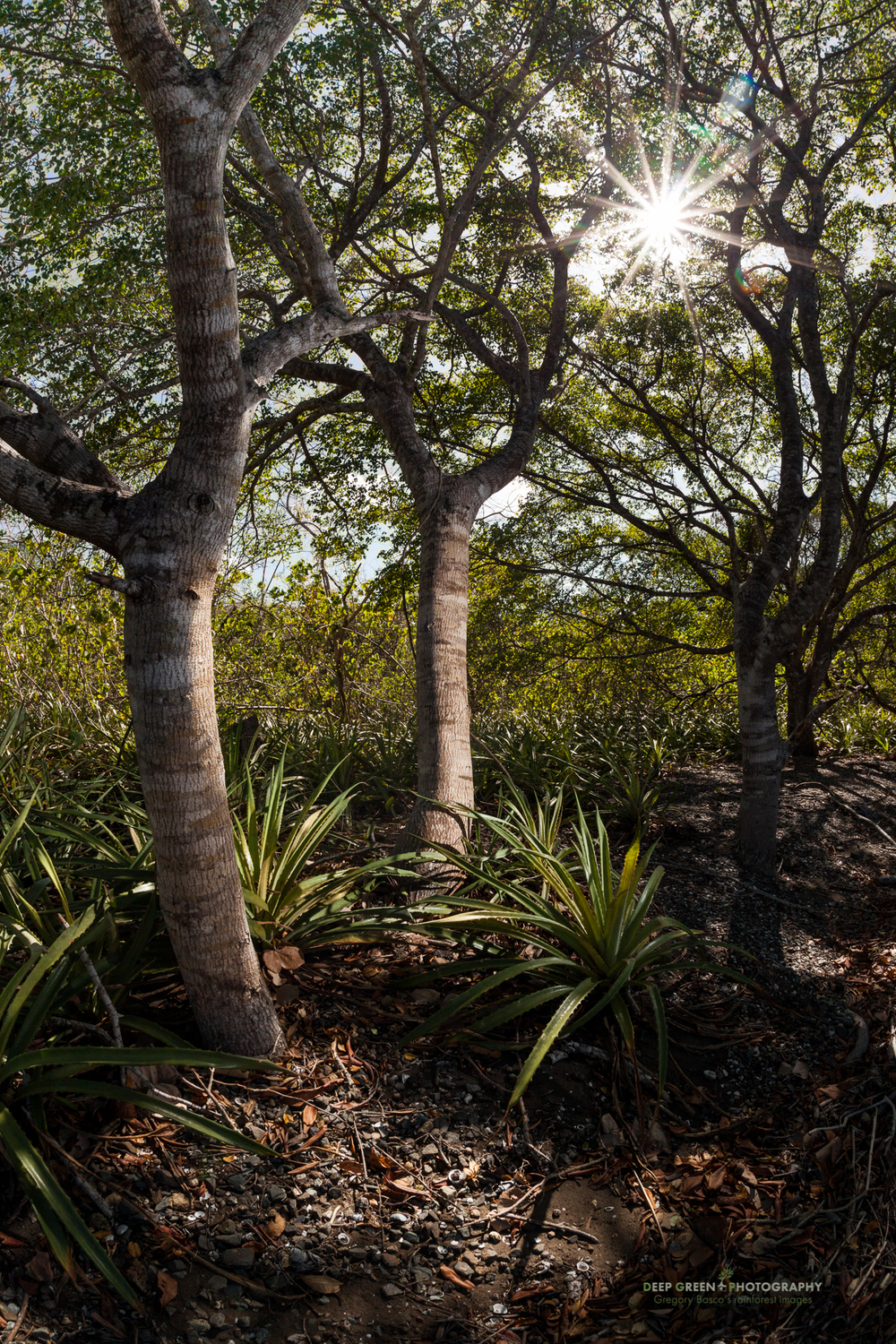 dry forest vegetation in Santa Rosa National Park