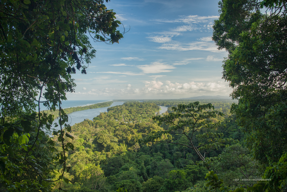 a difficult to access lookout point yielded a great view of Tortuguero National Park