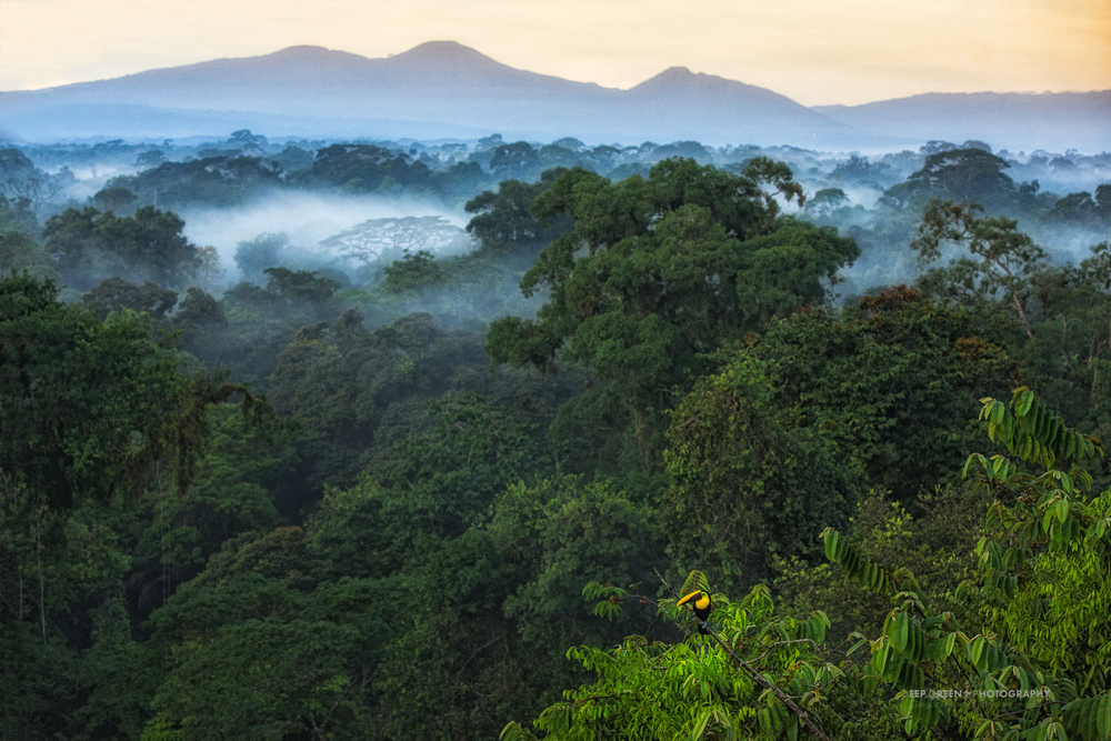 dawn breaks over the rainforest in the La Selva Biological Reserve