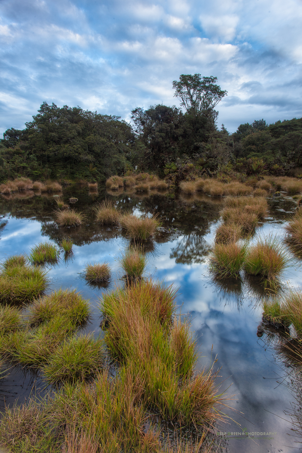 a highland bog at dawn in the Tapanti National Park