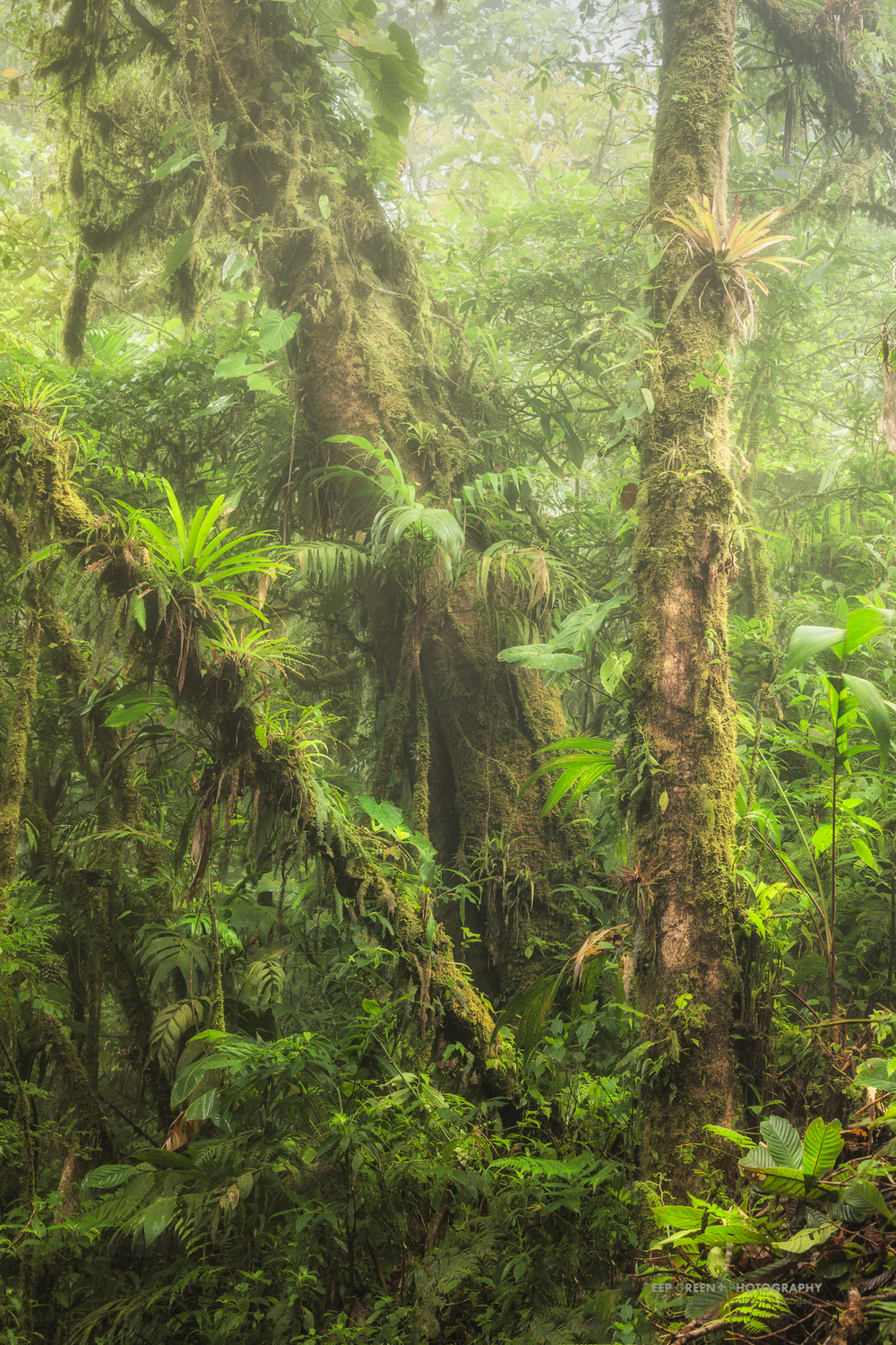 lush vegetation on a misty day in the Monteverde Cloud Forest Preserve