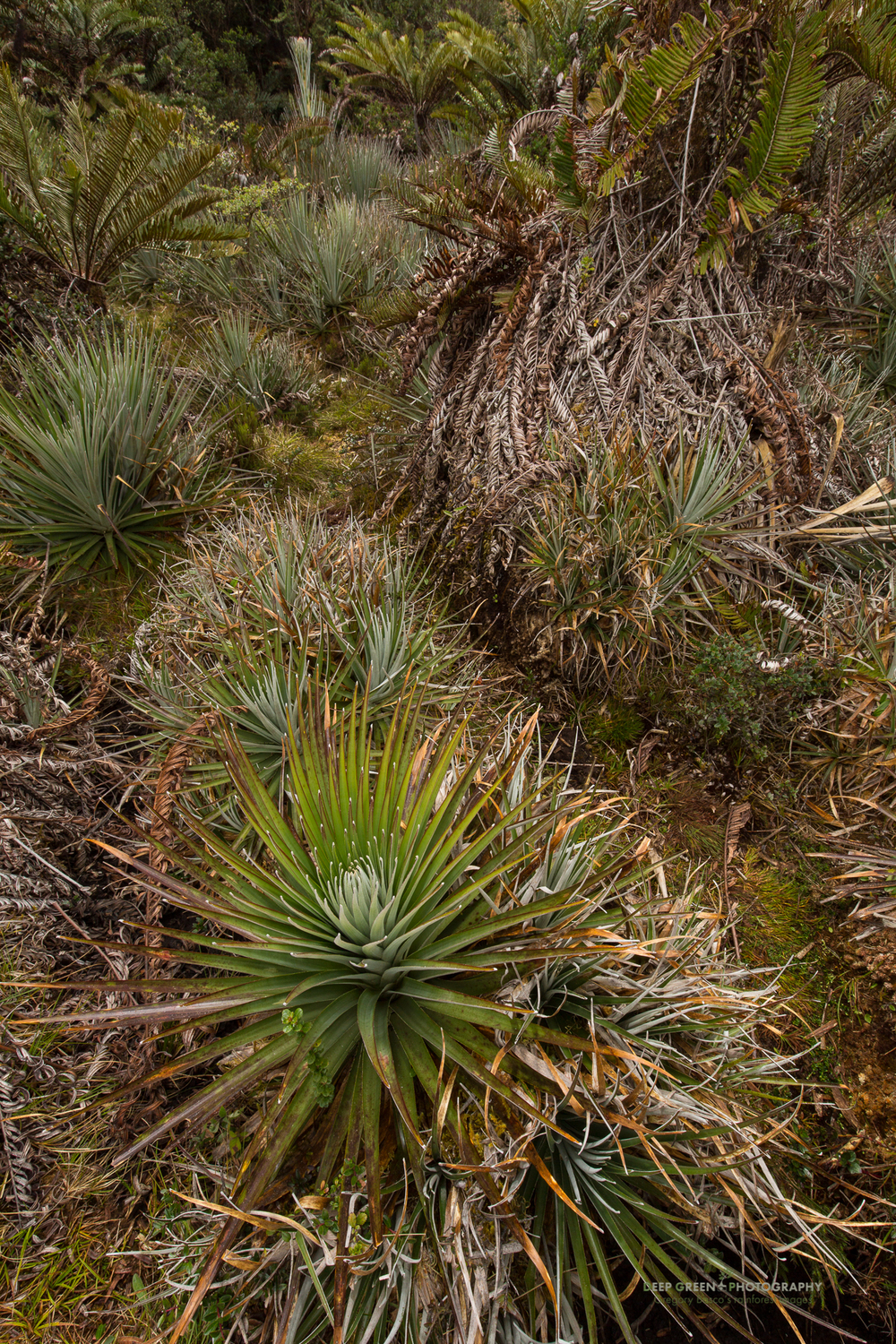 highland vegetation in Tapanti National Park