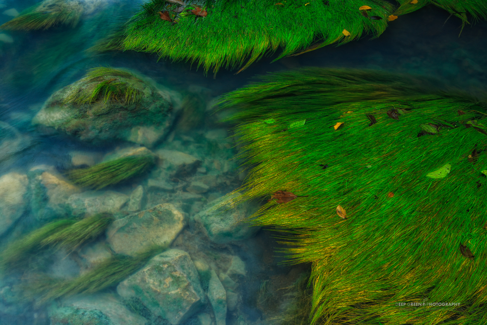 The Rio Celeste in Costa Rica's Tenorio Volcano National Park is one of my favorite destinations in the country for landscape photography. While spending a day in the park photographing with a friend, I composed this image of native aquatic grasses in the river. I liked the contrast of the green vegetation with the otherworldly blue water of the river, which results from suspended silica colloids, probably of volcanic origin.