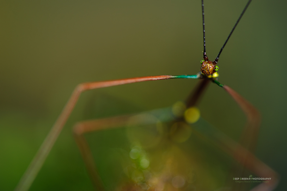 An aperture of f/5.6 helps to draw the viewer's eye to the eyes of this colorful walking stick. The shallow depth of field also produced some cool out of focus shapes and colors.