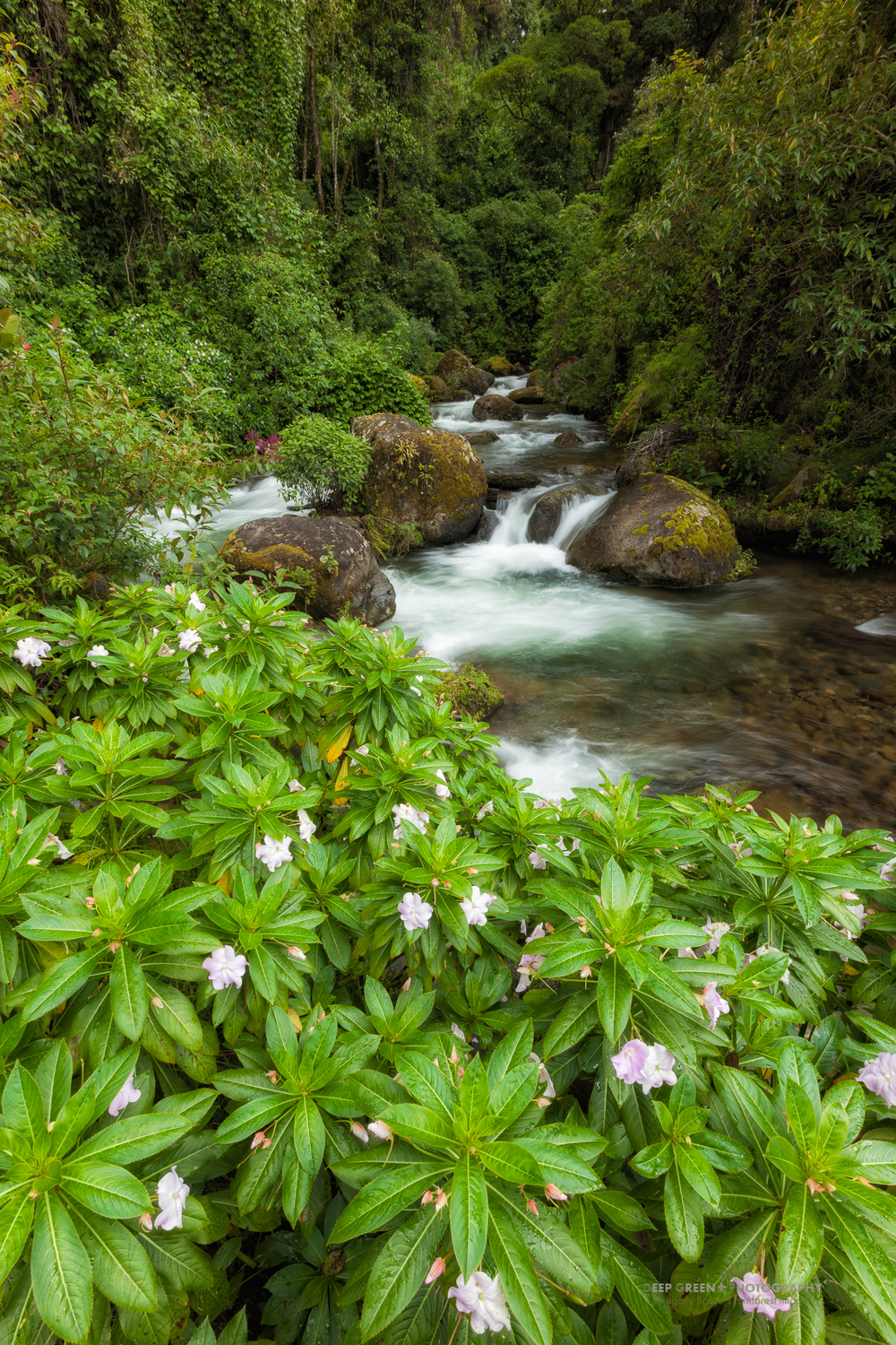 the beautiful Savegre River in the Talamanca Mountain Range is Costa Rica's best area for observing the Resplendent Quetzal