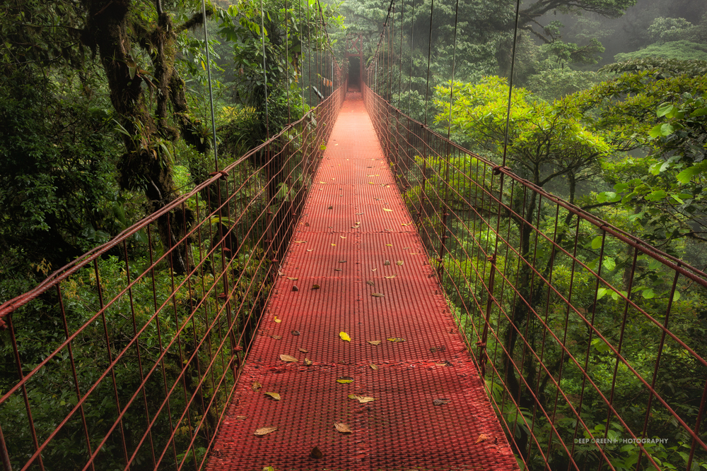 hanging bridge in the Monteverde Cloud Forest Preserve