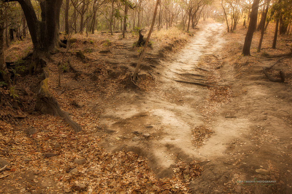 a trail through a tropical dry forest pasture in Guanacaste