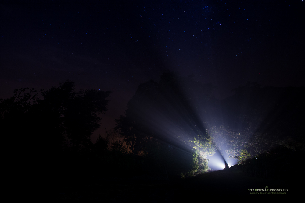 night scene near the Monteverde Cloud Forest Preserve