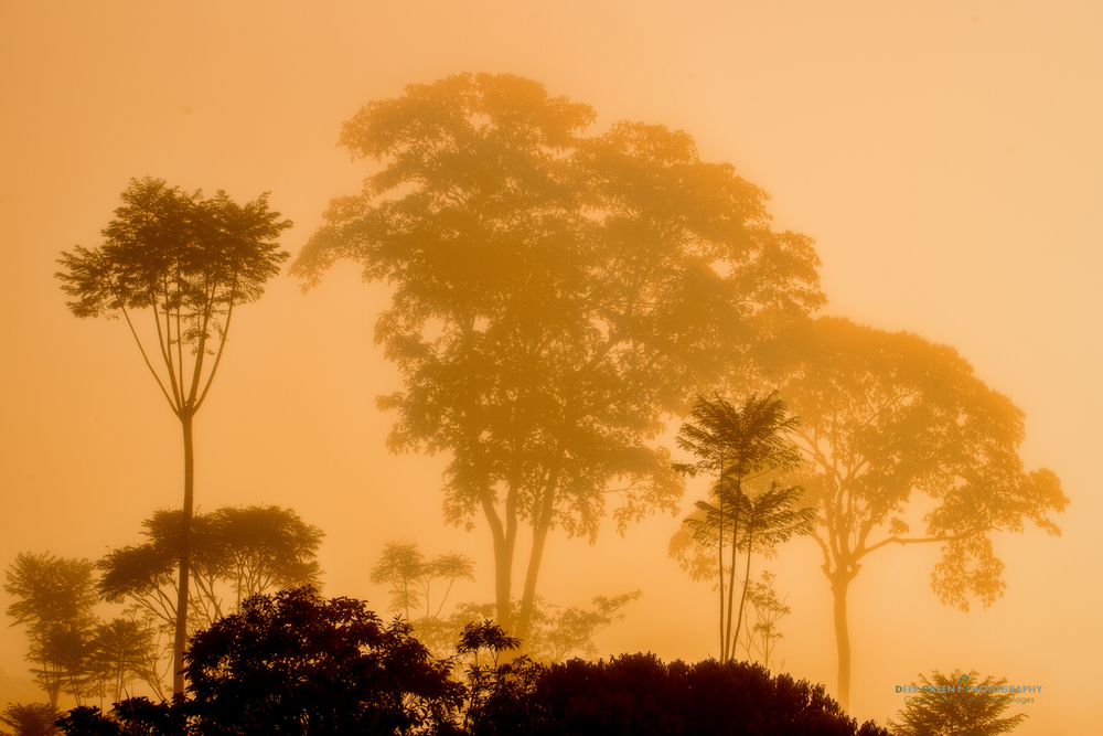 sun breaks through the for at dawn over a lowland rainforest in northern Costa Rica