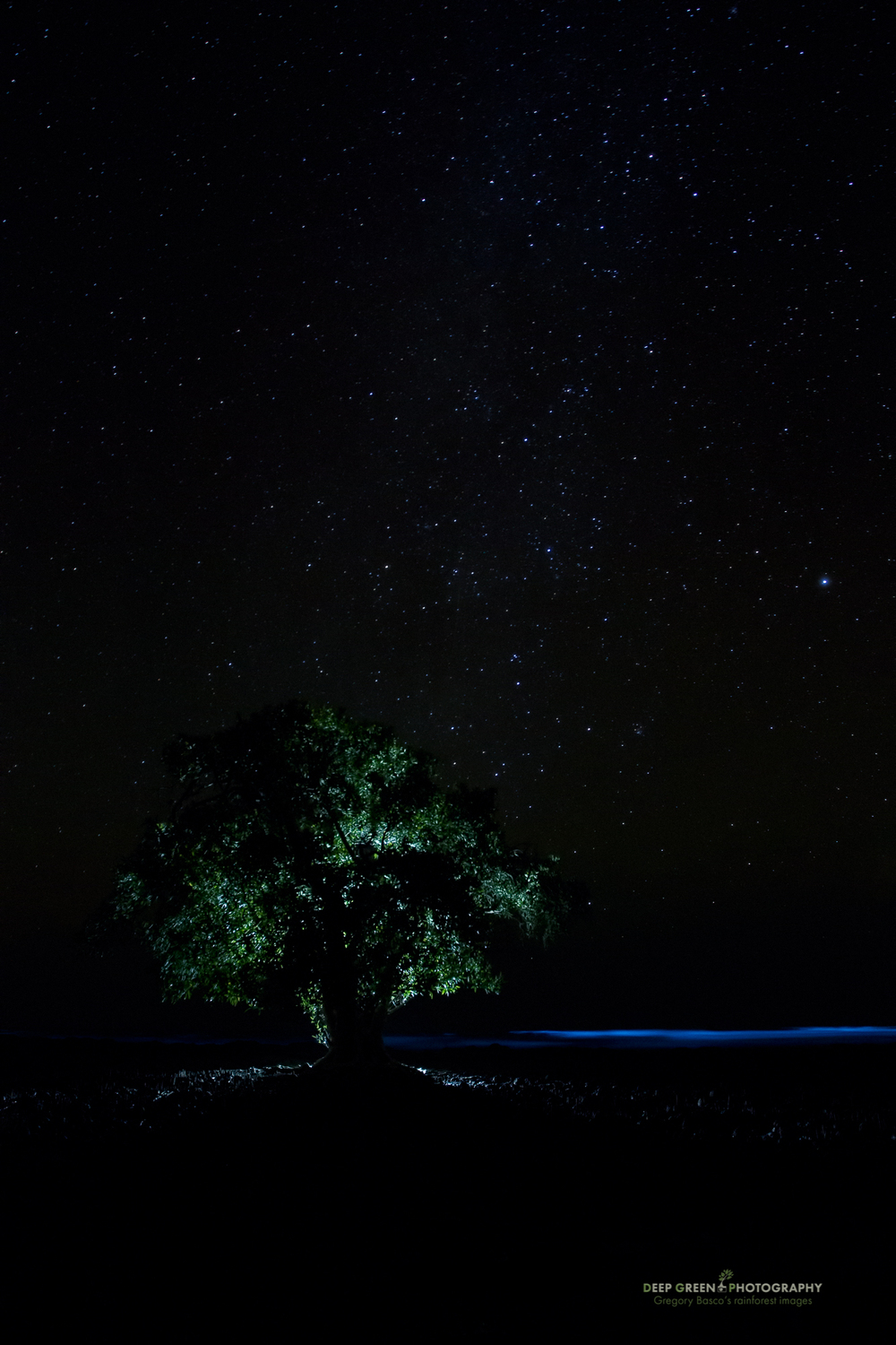 Mangrove tree and bioluminescent dinoflagellates in the Pacific Ocean near Cabo Blanco Refuge