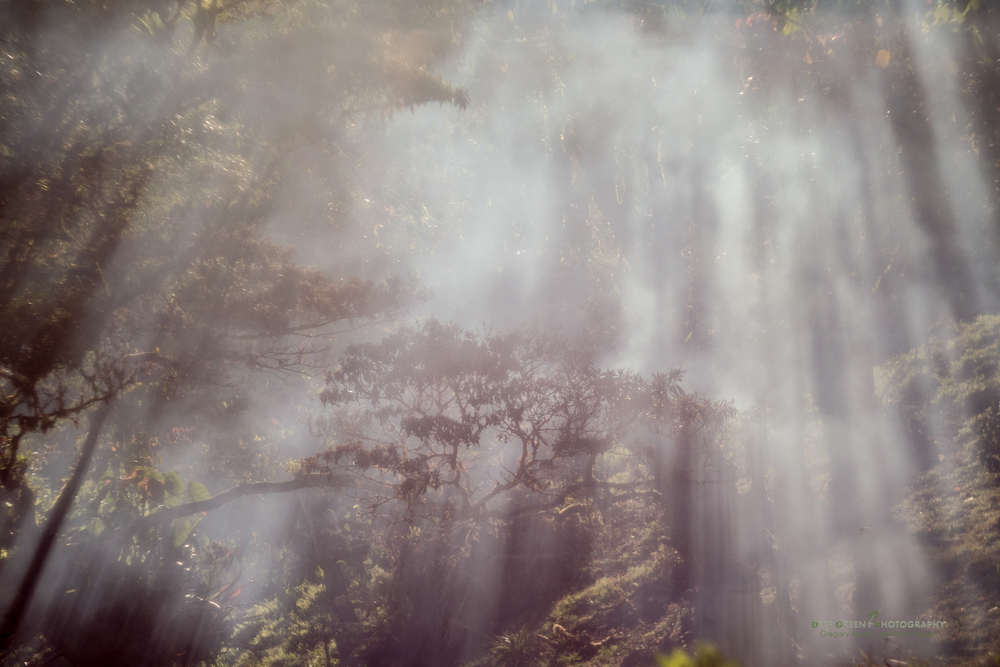 light rays peek through a cloud forest