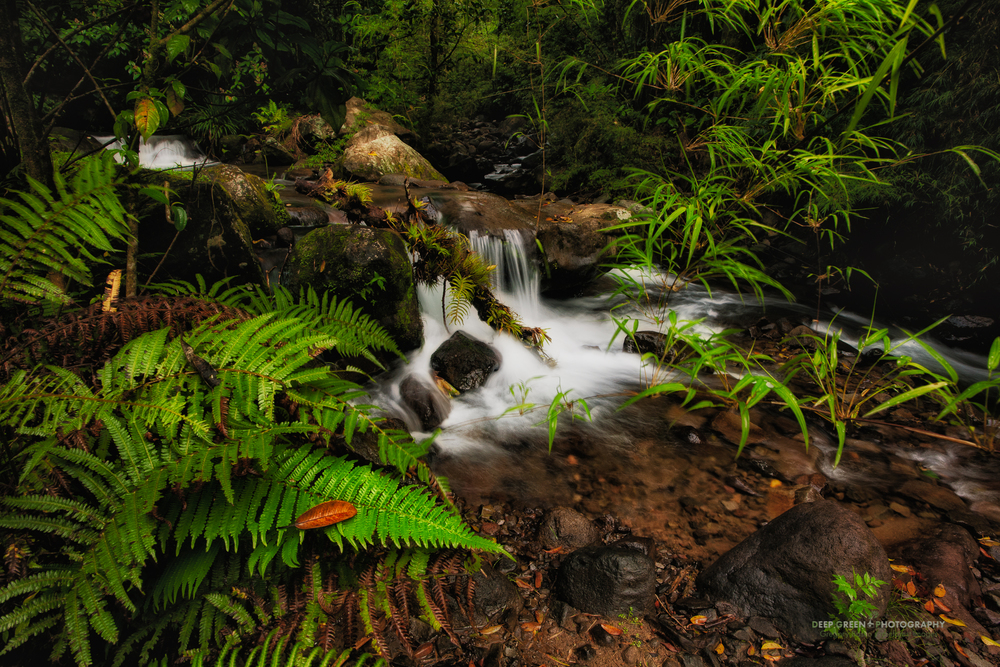 secluded stream in the Bosque de Paz private reserve