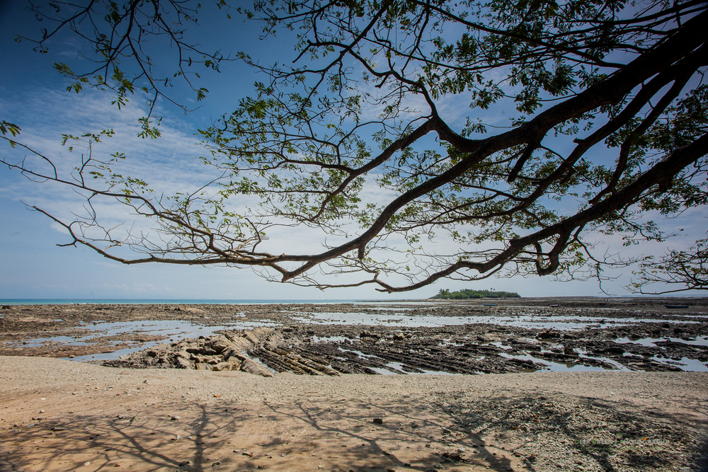 Tropical dry forest tree and rocky beach at low tide near Playa Montezuma on Costa Rica's Nicoya Peninsula