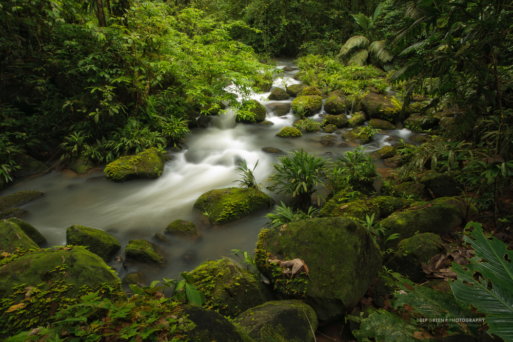 stream in the La Selva Biological Reserve