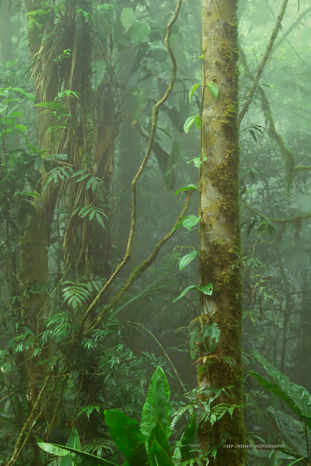 cloud forest, Villablanca