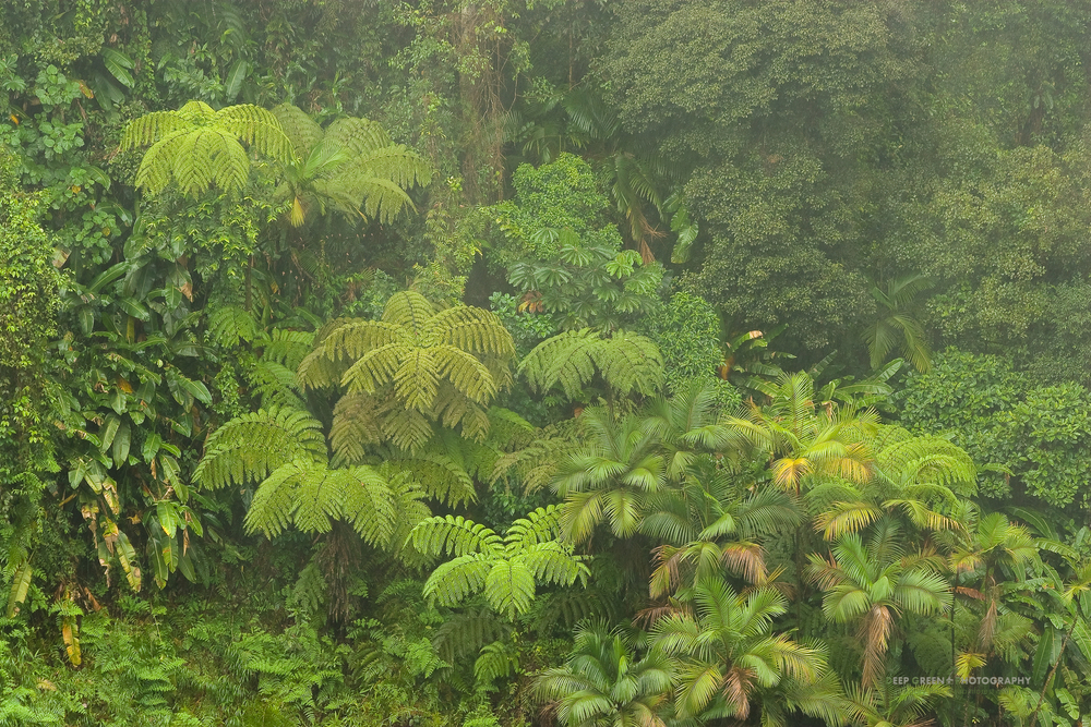 Cloud forest vegetation, Costa Rica