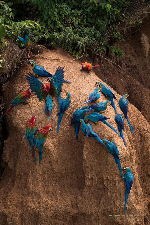 DGPstock-birds-206.jpg