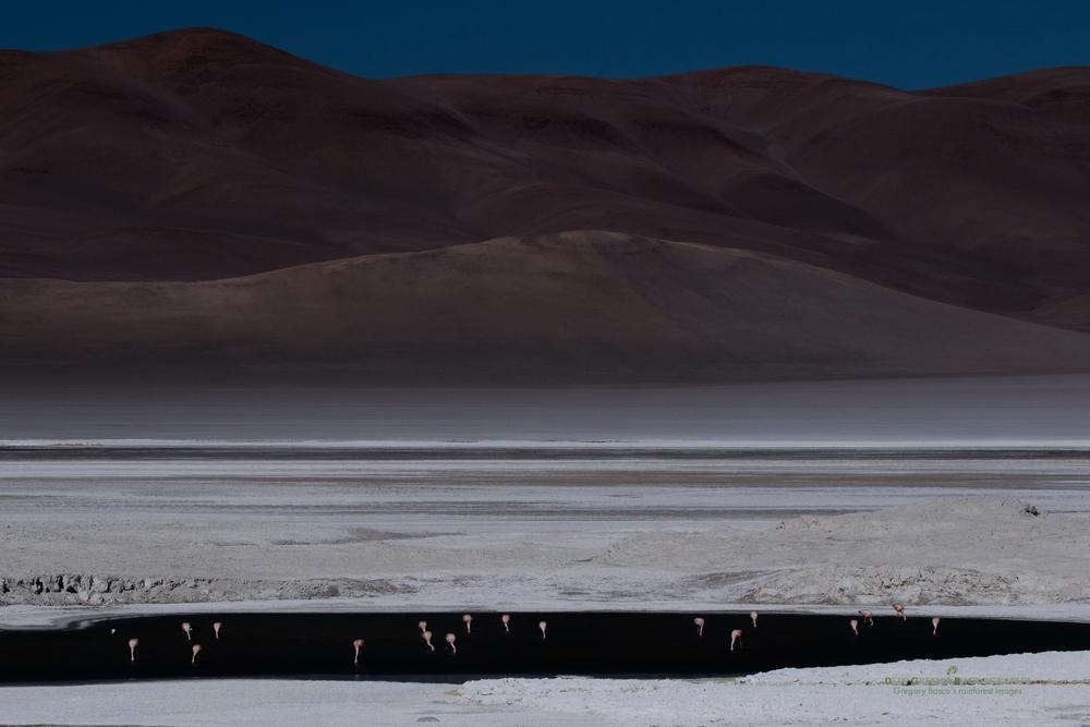 Flamingos forage on a dramatic highland salt lake in the Atacama Desert of Chile