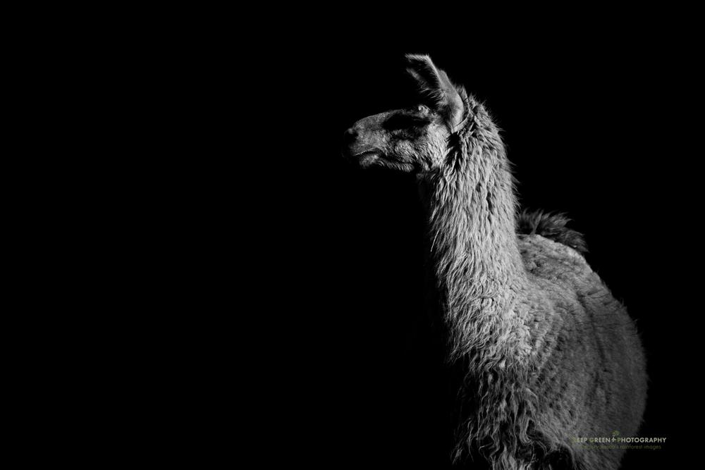 DGPstock-mammals-69.jpg