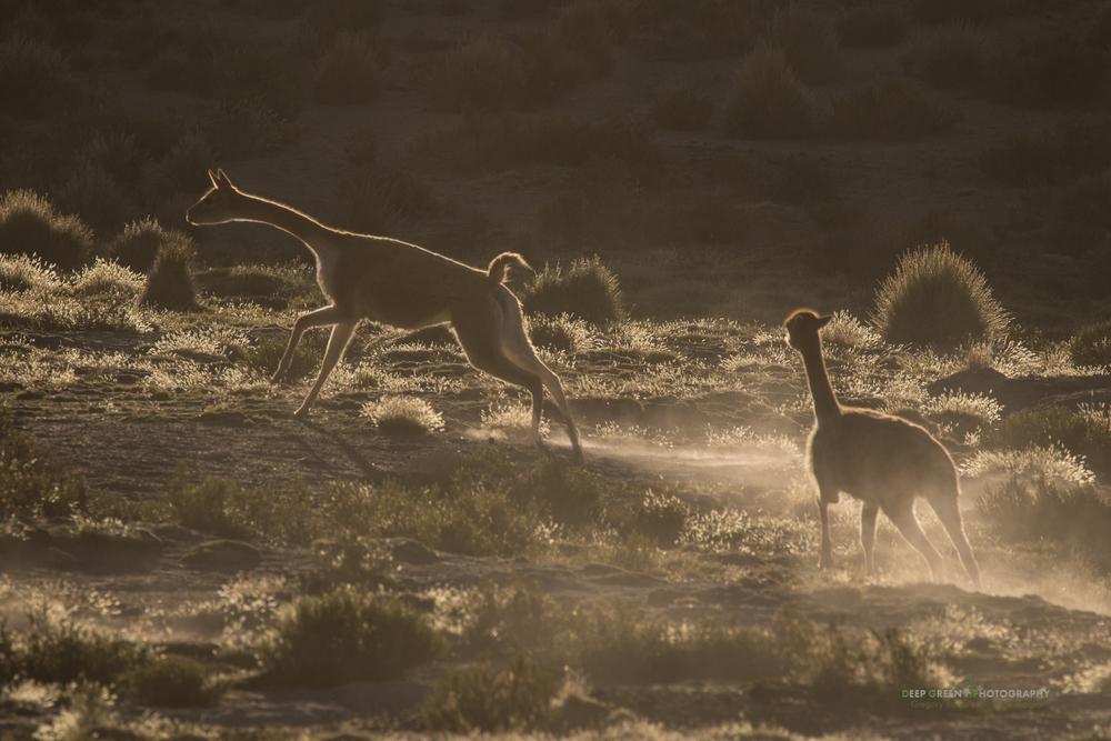 DGPstock-mammals-91.jpg